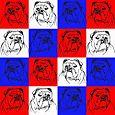 Bulldog Pattern2