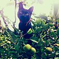 Meowsy apple tree