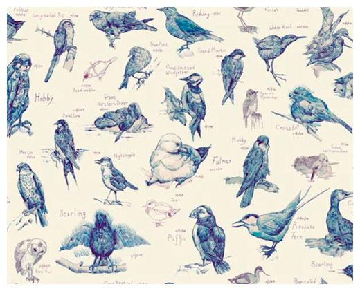 Edwyn_collins_ornithology_0