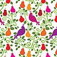 Partridge in a pear tree72
