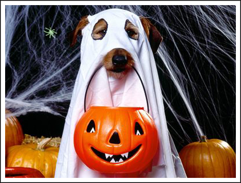 Trick_or_treater_4pwbw_r